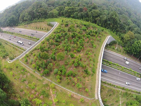 4 پل شگفت انگیزی که جان هزاران حیوان را نجات می دهند
